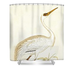 Siberian Crane Shower Curtain by English School