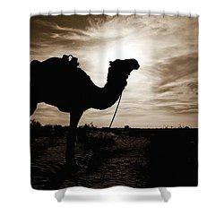 Silhouetted Camel, Sahara Desert, Douz Shower Curtain by David DuChemin