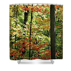 Simply Autumn Shower Curtain by Joan  Minchak