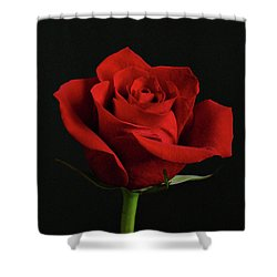 Simply Red Rose Shower Curtain by Sandy Keeton