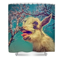 Sing It Again Shower Curtain by TC Morgan