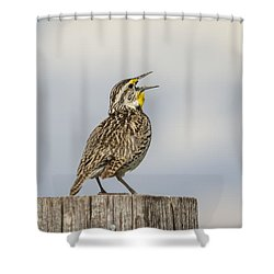 Singing A Song Shower Curtain by Thomas Young
