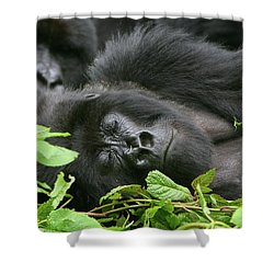 Sleeping Giant Shower Curtain by Bruce J Robinson