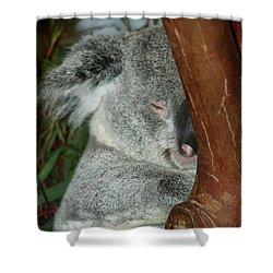 Sleeping Koala Shower Curtain by Mariola Bitner
