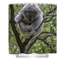 Sleepy Koala Shower Curtain by Avalon Fine Art Photography