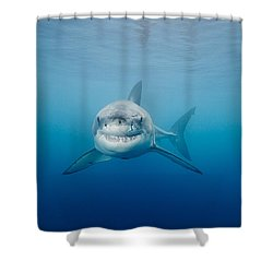 Smiling Great White Shark Shower Curtain by Dave Fleetham - Printscapes