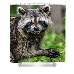 Smiling Raccoon Shower Curtain by Paul Freidlund