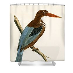 Smyrna Kingfisher Shower Curtain by English School