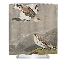 Snow Bunting Shower Curtain by John James Audubon