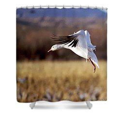 Snow Goose Shower Curtain by Steven Ralser