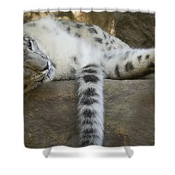 Snow Leopard Nap Shower Curtain by Mike  Dawson