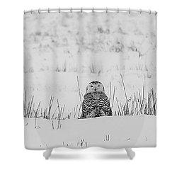 Snowy Owl In Snowy Field Shower Curtain by Carrie Ann Grippo-Pike