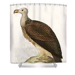 Sociable Vulture Shower Curtain by English School