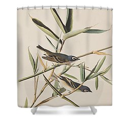 Solitary Flycatcher Or Vireo Shower Curtain by John James Audubon