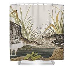 Solitary Sandpiper Shower Curtain by John James Audubon