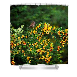 Song Sparrow Bird On Blooming Scotch Shower Curtain by Panoramic Images