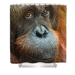 Soulful Shower Curtain by Jamie Pham