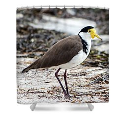 Southern Masked Lapwing Shower Curtain by Nicholas Blackwell