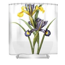Spanish Iris Shower Curtain by Granger