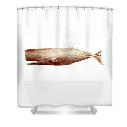 Sperm Whale Shower Curtain by Michael Vigliotti