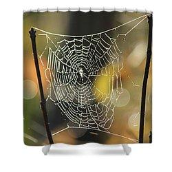 Spider's Creation Shower Curtain by Karol Livote