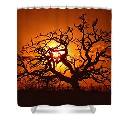 Spooky Tree Shower Curtain by Stephen Anderson