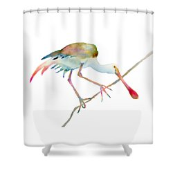 Spoonbill  Shower Curtain by Amy Kirkpatrick