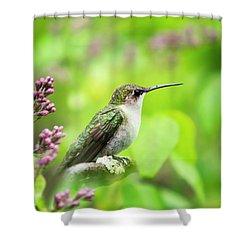Spring Beauty Ruby Throat Hummingbird Shower Curtain by Christina Rollo