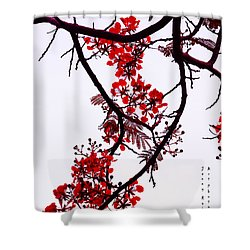 Spring Bloosom In Maldives. Flamboyant Tree Shower Curtain by Jenny Rainbow