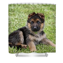Spring Puppy Shower Curtain by Sandy Keeton