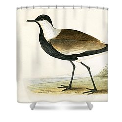 Spur Winged Plover Shower Curtain by English School