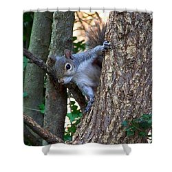 Squirrel I Shower Curtain by Jai Johnson