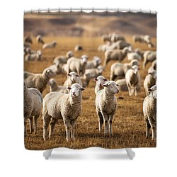 Standing Out In The Herd Shower Curtain by Todd Klassy