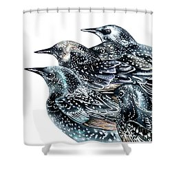 Starlings Shower Curtain by Marie Burke