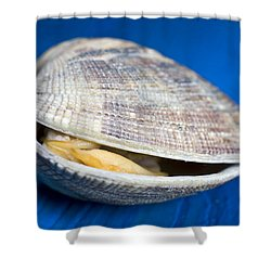 Steamed Clam Shower Curtain by Frank Tschakert