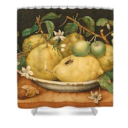 Still Life With A Bowl Of Citrons Shower Curtain by Giovanna Garzoni