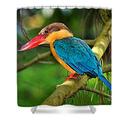 Stork-billed Kingfisher Shower Curtain by Louise Heusinkveld
