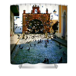 Street Pigeons Shower Curtain by Perry Webster