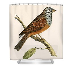 Striolated Bunting Shower Curtain by English School