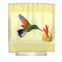 Stripe Tailed Hummingbird Shower Curtain by Michael Vigliotti