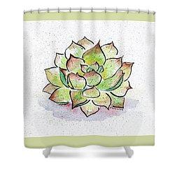 Succulent Shower Curtain by Diane Thornton