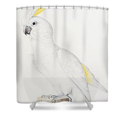 Sulphur Crested Cockatoo Shower Curtain by Nicolas Robert