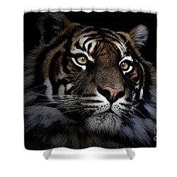 Sumatran Tiger Shower Curtain by Avalon Fine Art Photography