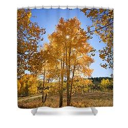 Sun Through Aspens Shower Curtain by Ron Dahlquist - Printscapes