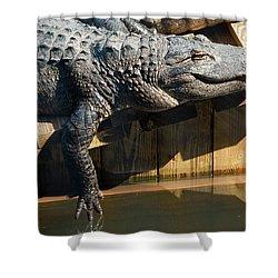 Sunbathing Gator Shower Curtain by Carolyn Marshall