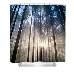 Sunburst In The Forest Shower Curtain by Greg Vaughn - Printscapes