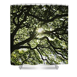 Sunburst Through Tree Shower Curtain by Brandon Tabiolo - Printscapes