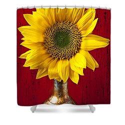 Sunflower Close Up Shower Curtain by Garry Gay