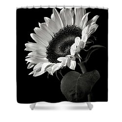 Sunflower In Black And White Shower Curtain by Endre Balogh