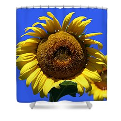Sunflower Series 09 Shower Curtain by Amanda Barcon